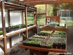 propagaton greenhouse Park Garden